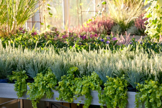 Októbrová záhrada