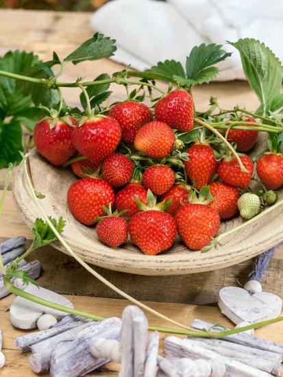 Starostlivosť o jahody počas roka
