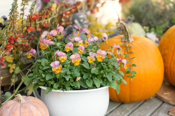 Jesenné dekorácie na balkóne