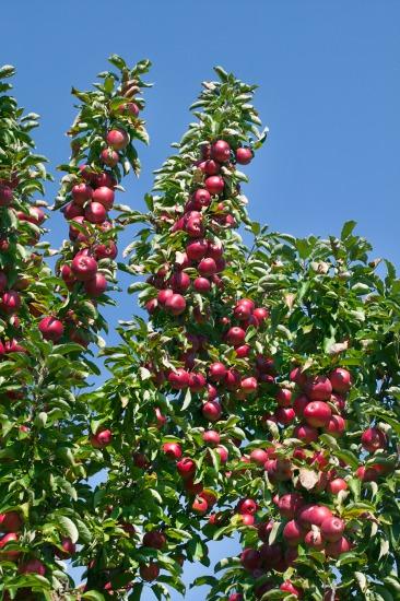 Čo sa oplatí pestovať v ovocnom sade?