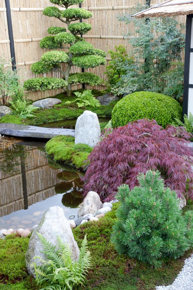 Rastlina v japonskej záhrade