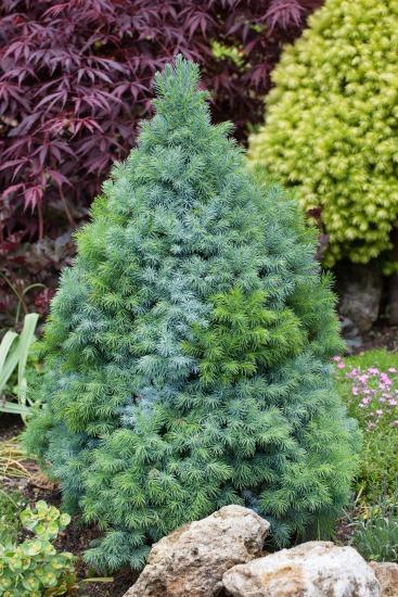 Dekoratívne stromy a kry pre oživenie záhrady