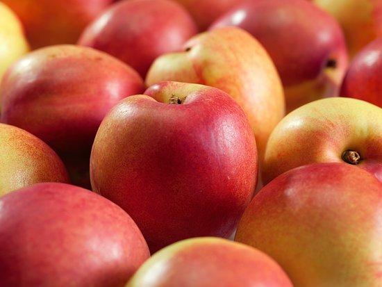 Ochrana ovocných stromov