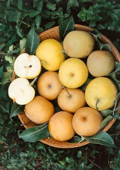 Ovocné chuťovky z terasy a balkóna