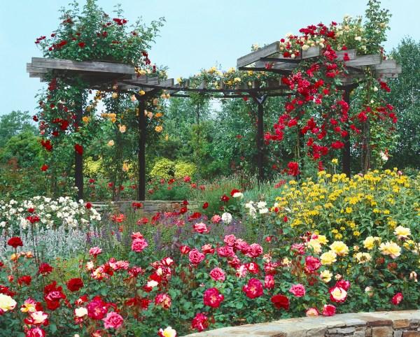 Kombinácie ruží s inými trvalkami