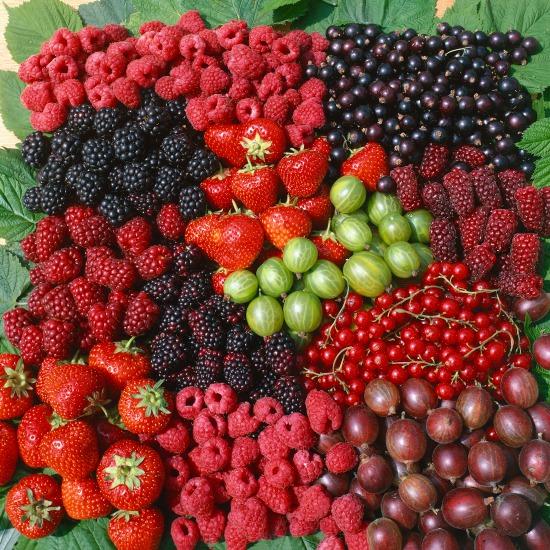 Pestovanie v nádobe