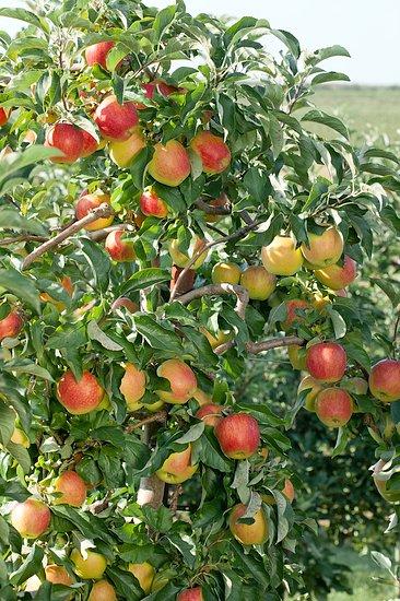Ovocné desatoro