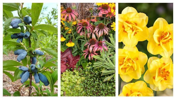 Rastliny, ktoré sa sadia na jeseň