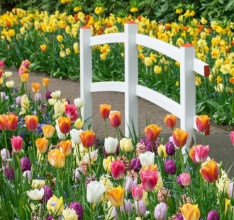 Cibuľoviny na záhrade