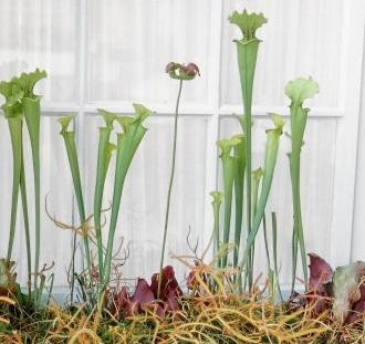 Hmyzožravé rastliny
