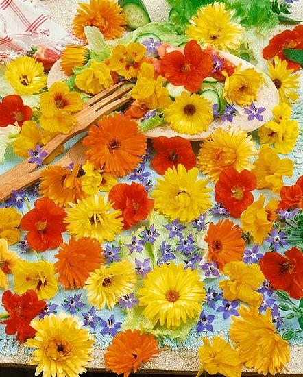 28db436b5 Dokonca aj z balkóna viete zozbierať okrasné kvetenstvá fuksie a muškátu.  Výborné sú citrusové kvety.