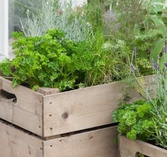 Rastliny v bedničkách