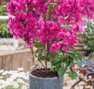 Rastliny v nádobách - starostlivosť