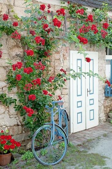 Vintage záhrada